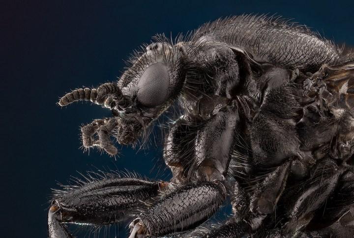 Макро фотографии насекомых (4)