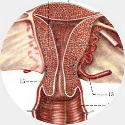 Ошибки эволюции в строении человеческого тела (5)