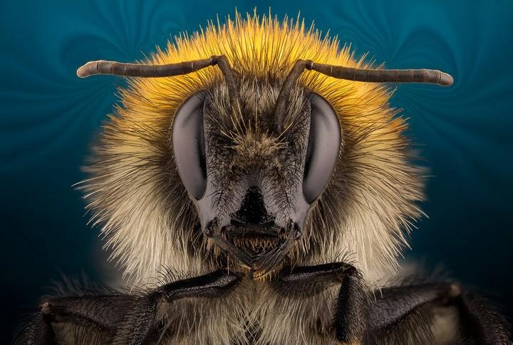 Макро фотографии насекомых (6)