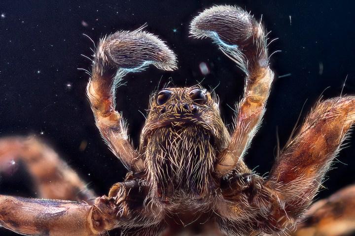 Макро фотографии насекомых (8)