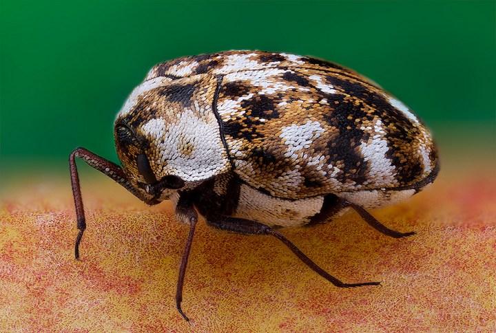 Макро фотографии насекомых (9)