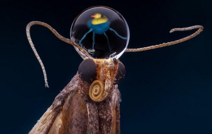 Макро фотографии насекомых (11)