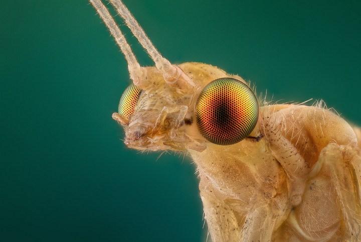 Макро фотографии насекомых