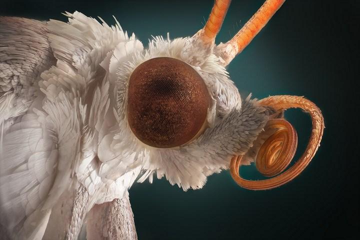 Макро фотографии насекомых (14)
