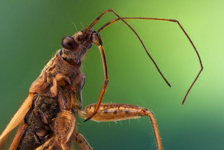 Макро фотографии насекомых (16)