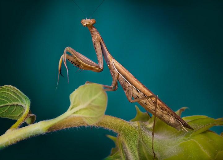 Макро фотографии насекомых (19)