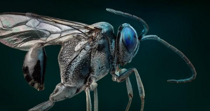 Макро фотографии насекомых (22)