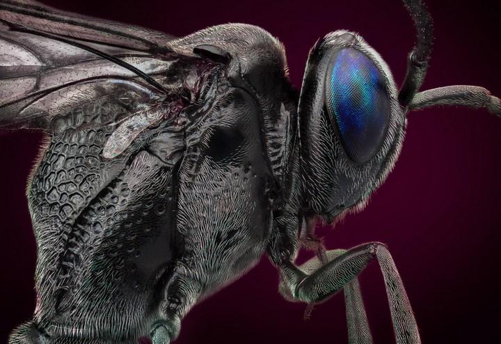 Макро фотографии насекомых (23)