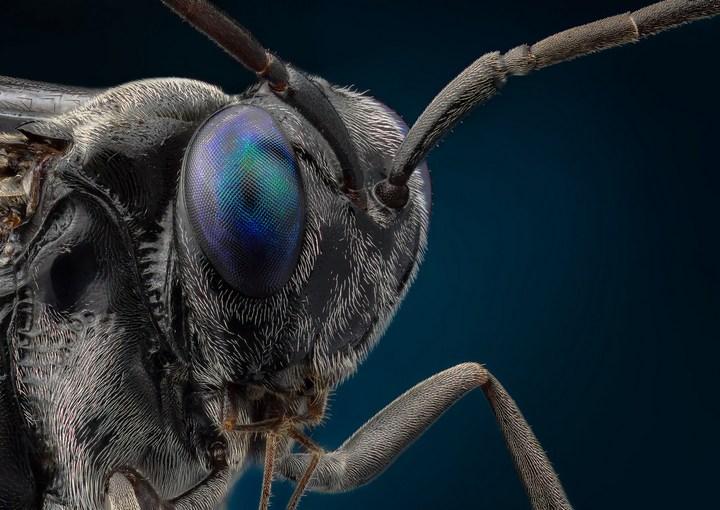 Макро фотографии насекомых (25)
