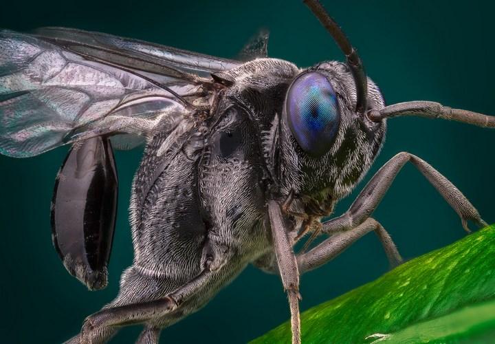 Макро фотографии насекомых (26)
