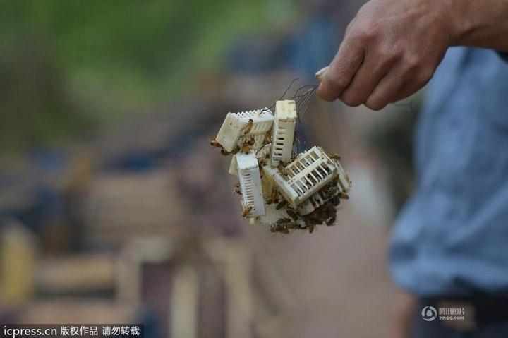 Китайца облепили 460 000 пчел (5)
