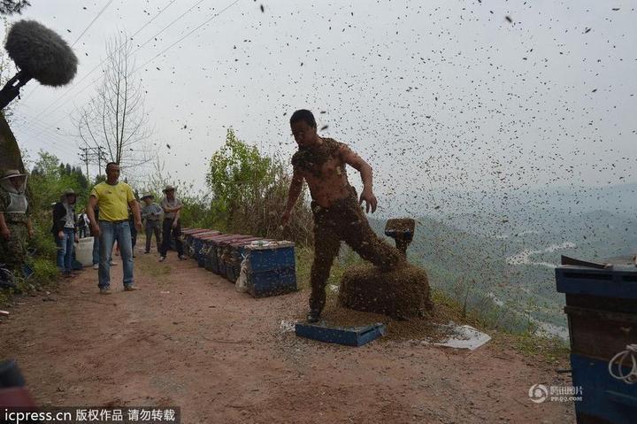 Китайца облепили 460 000 пчел (11)