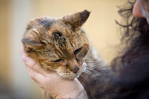 Рекорд Гиннеса. Поппи — самая старая кошка в мире (3)