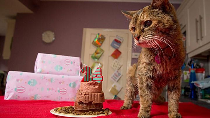 Рекорд Гиннеса. Поппи — самая старая кошка в мире (1)