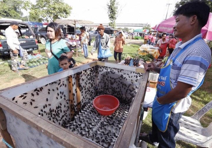 Как в Таиланде разводят съедобных насекомых (1)