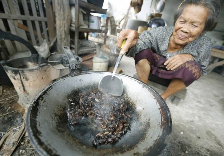 Как в Таиланде разводят съедобных насекомых (8)