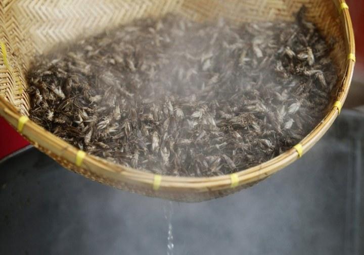 Как в Таиланде разводят съедобных насекомых (10)