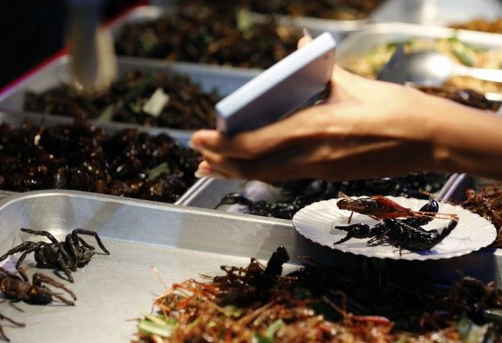 Как в Таиланде разводят съедобных насекомых (13)
