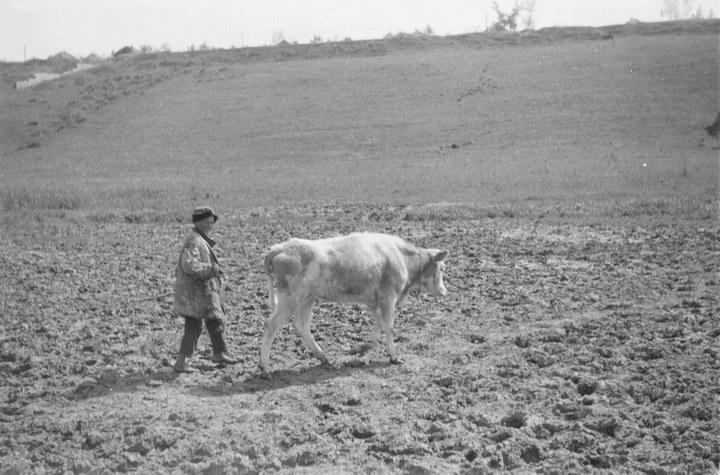 Белгородская область в объективе немецкого фотографа Франца Грассера, 1943 год (7)