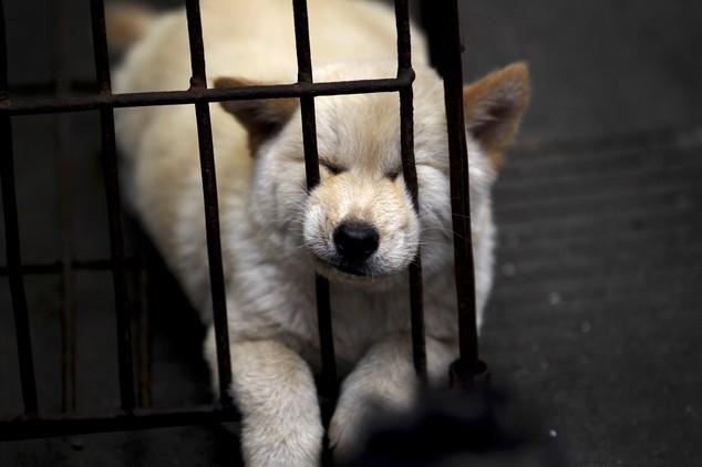 """""""Праздничное"""" поедание собак в Китае (8)"""