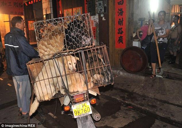 """""""Праздничное"""" поедание собак в Китае (6)"""