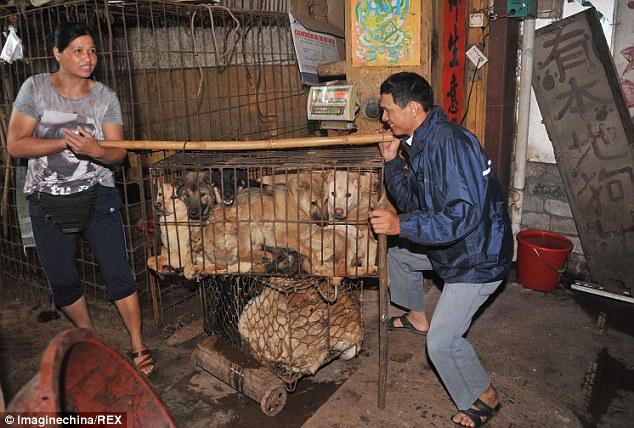 """""""Праздничное"""" поедание собак в Китае (5)"""
