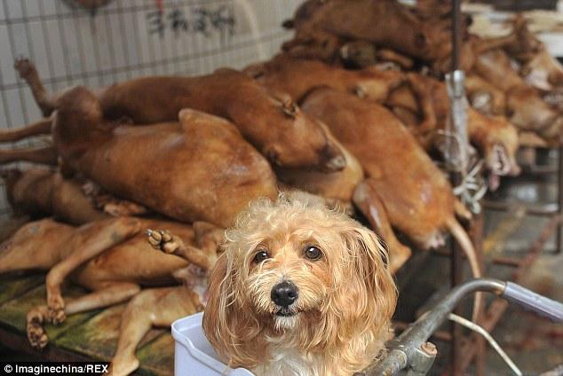 """""""Праздничное"""" поедание собак в Китае (1)"""