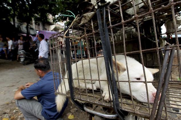 """""""Праздничное"""" поедание собак в Китае (7)"""