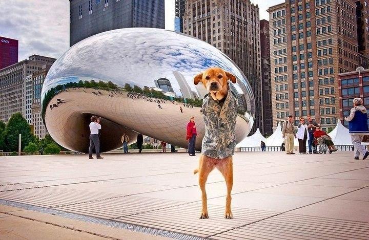 Двухлапый пес в Чикаго