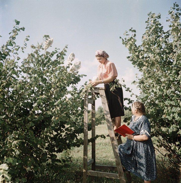 Лица Советской эпохи на фотографиях Семена Осиповича Фридлянда (4)