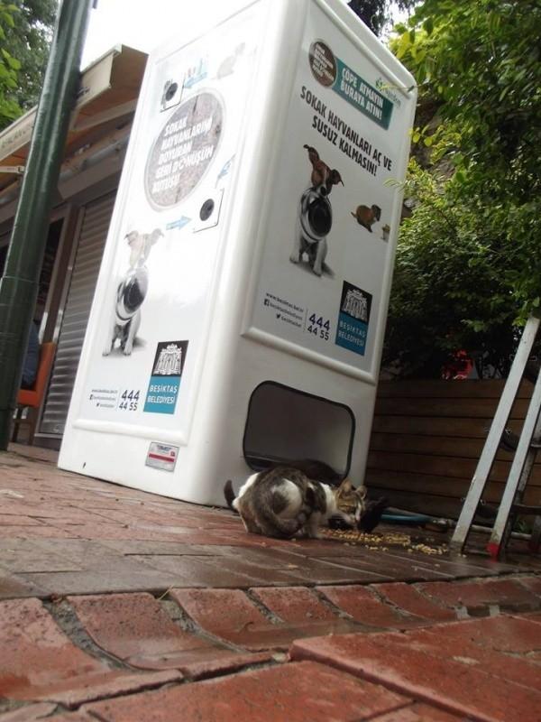 Автоматы с едой для бездомных животных (2)