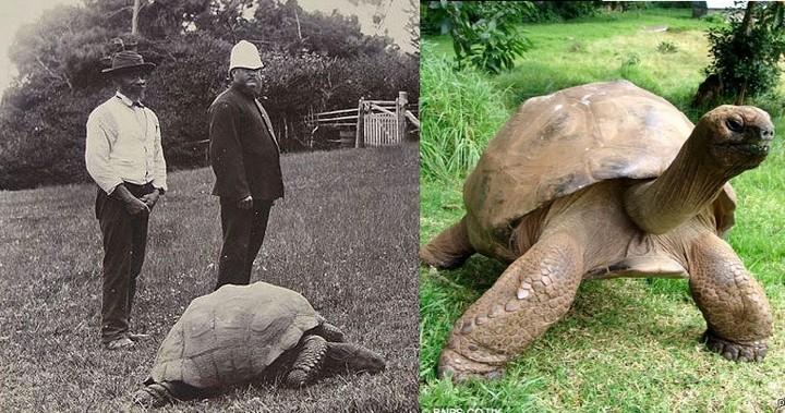 черепаха долгожитель