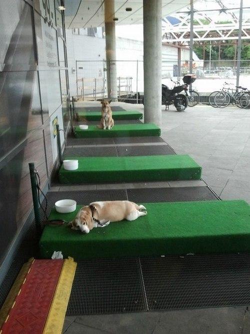 Парковка для собак (3)