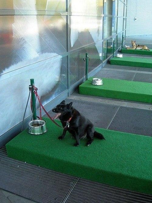 Парковка для собак (2)