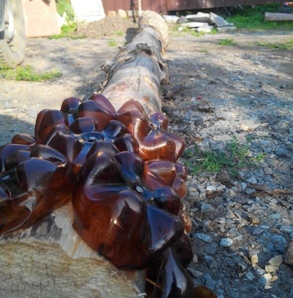 Как сделать пальму из пластиковых бутылок (1)