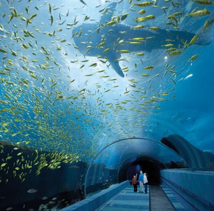 Самый большой аквариум в мире (8)
