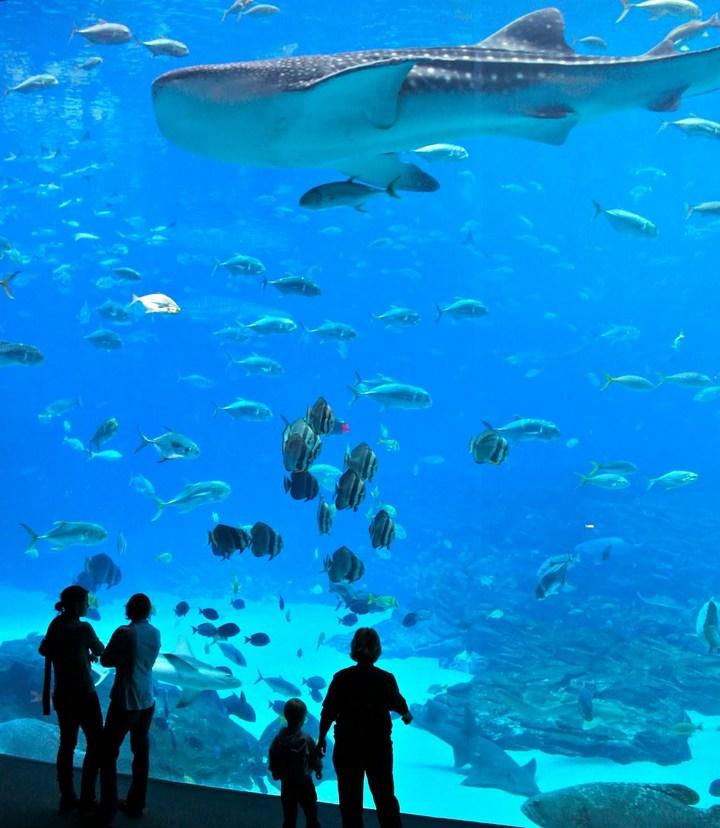 Самый большой аквариум в мире (6)