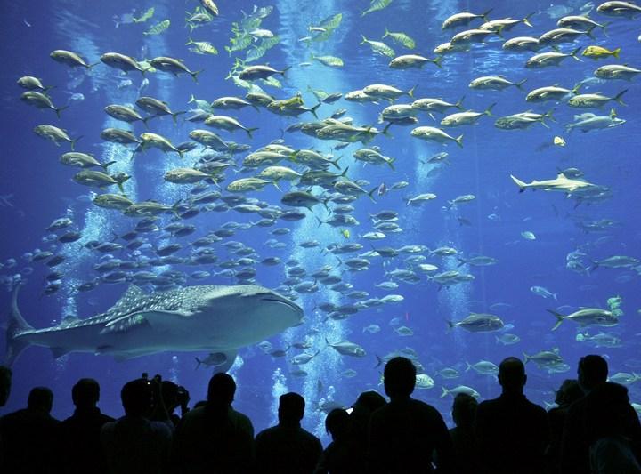 Самый большой аквариум в мире (5)
