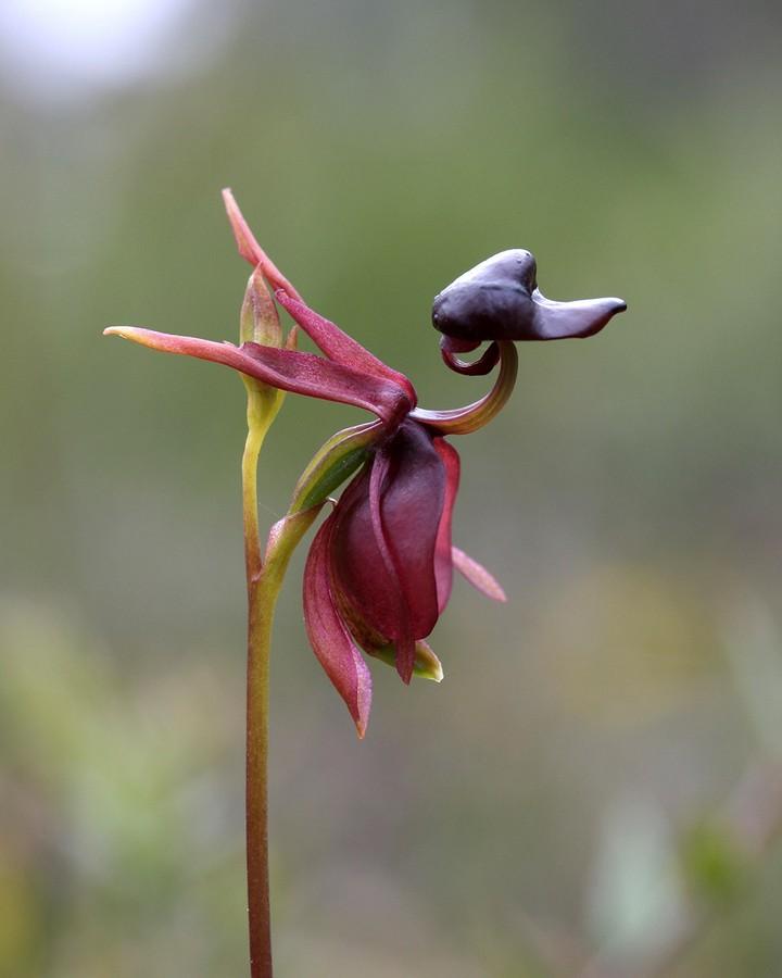 Десять самых необычных цветов в мире (5)
