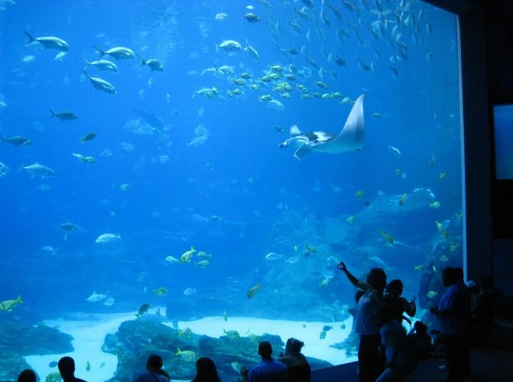 Самый большой аквариум в мире (4)