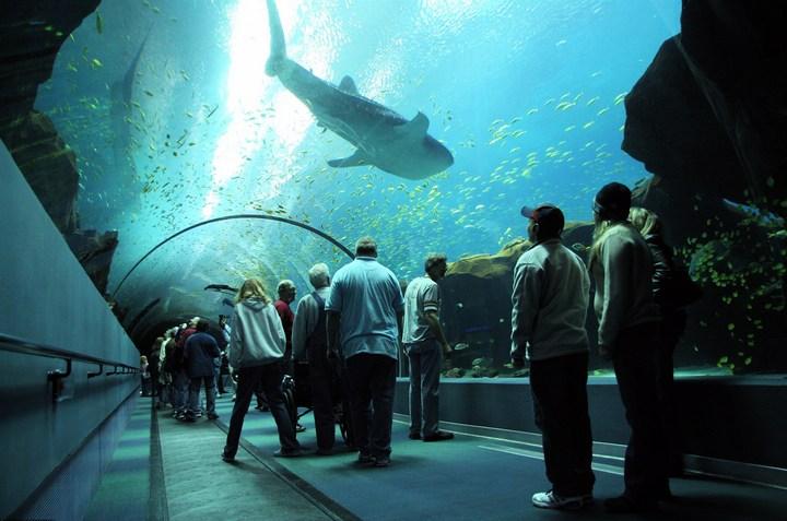 Самый большой аквариум в мире (1)