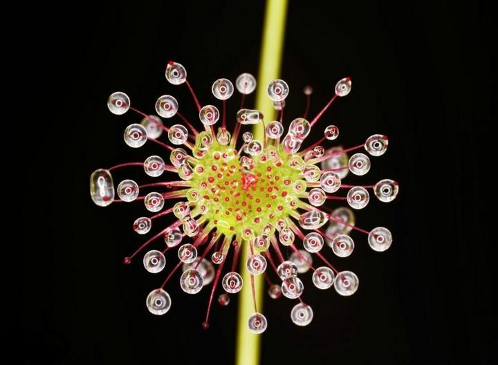 Десять самых необычных цветов в мире (9)