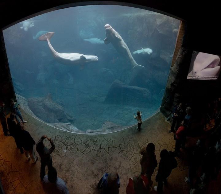 Самый большой аквариум в мире (7)