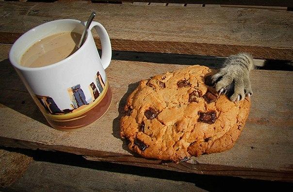 Голод не тётка или коты-воришки (6)