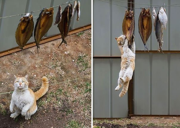 Голод не тётка или коты-воришки (3)
