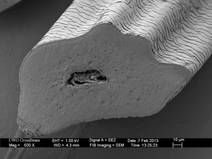 Под электронным сканирующем микроскопом (1)