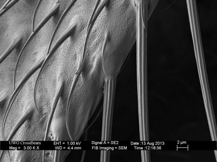 Под электронным сканирующем микроскопом (3)