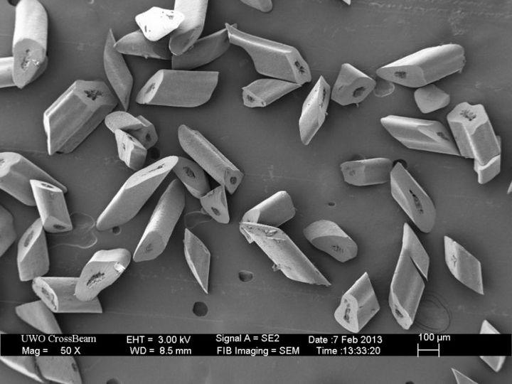 Под электронным сканирующем микроскопом (4)