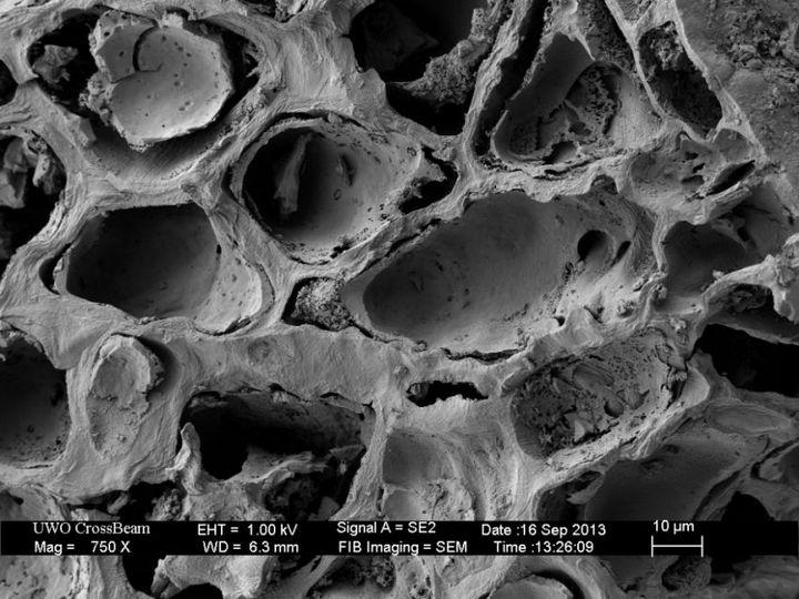 Под электронным сканирующем микроскопом (8)