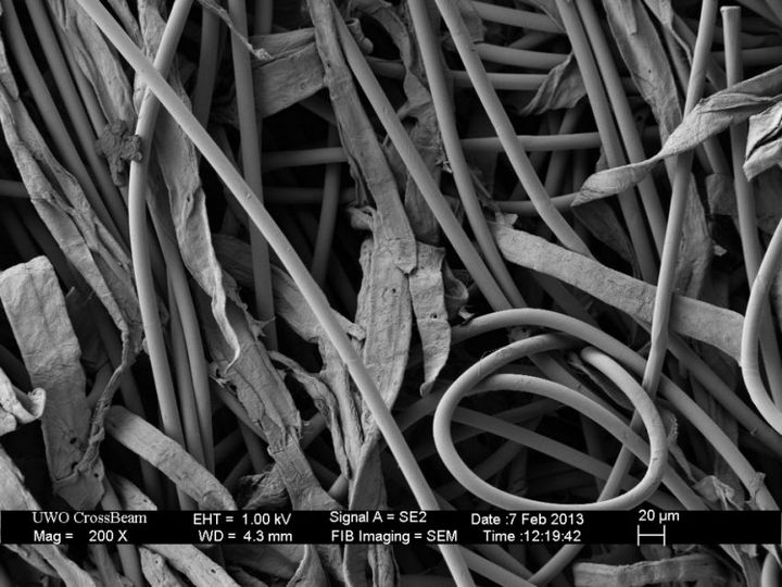 Под электронным сканирующем микроскопом (12)